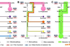 佛里德兰德氏杆菌中沉默基因glp的激活使甘油代谢途径中碳流走向乙偶姻的生成