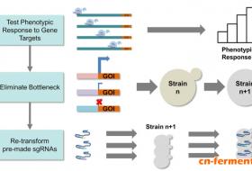 利用CRISPR-dCas9快速优化酿酒酵母代谢途径
