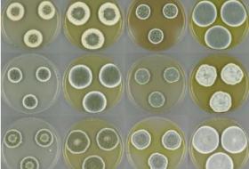 开发新型抗生素,将从真菌下手