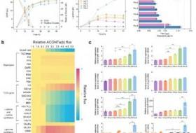 微生物所合作建立新的谷氨酸棒杆菌基因组规模代谢网络模型