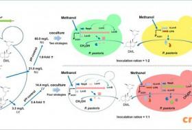 张元兴团队《代谢工程》发表关于甲醇酵母合成生物学方面的最新研究进展