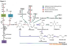 交大张雪洪研究组:在绿脓假单胞菌中开发无质粒生物合成途径提高粘康酸产量