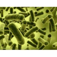 求购沼气菌种和发酵工艺