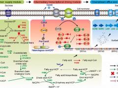 江南大学徐岩实验室:系统的代谢工程提高枯草芽孢杆菌168中表面活性素的合成