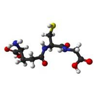 转让生物发酵法生产还原型谷胱甘肽(GSH)技术 酿酒酵母菌
