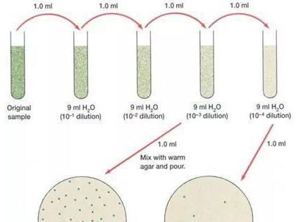 微生物检测基础知识大全!(包含微生物检测的接种、培养、分离纯化、鉴定和保存等)