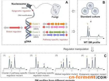 微生物所发表真菌沉默基因簇激活策略综述文章