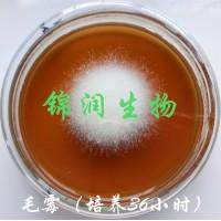 锦润牌毛霉菌 毛豆腐菌种,霉千张、霉豆渣菌种