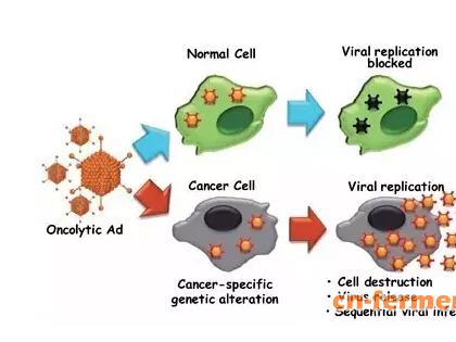 蔡立刚博士专访:提高溶瘤病毒有效性的上游创新策略