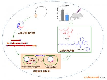 中科院微生物所陈义华研究组开发厌氧菌表达系统挖掘人体微生物天然产物