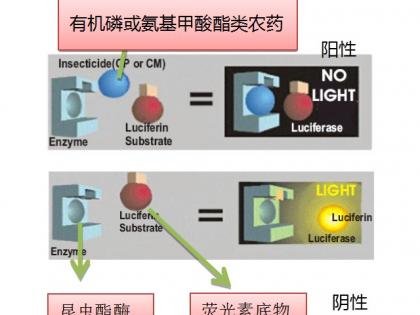 先进的农药残留快速检测技术——生物荧光法