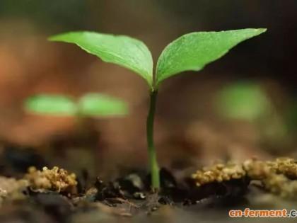 请注意!农业部批准登记的微生物肥料只有这11类