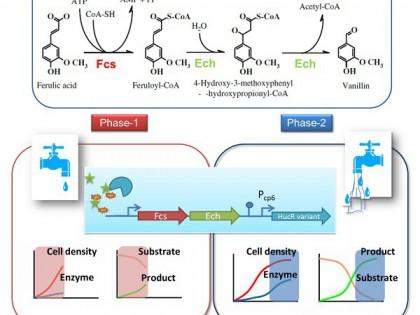 微生物所等设计动态调控元件助力天然产物香草醛生物合成