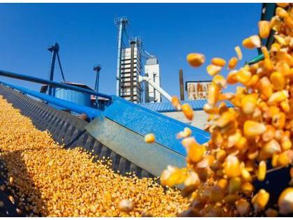 玉米价格高飞猛进 市场是否已经开始进入牛市
