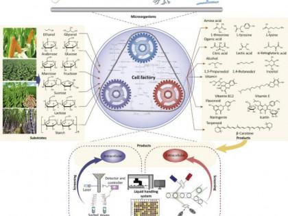 周景文教授综述:高通量筛选技术在工业生物技术的应用