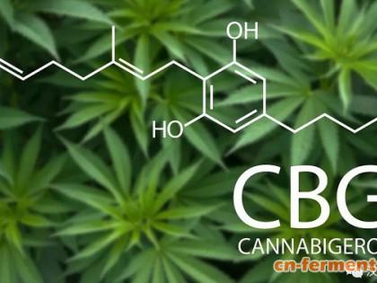 CBG(大麻萜酚):大麻素中的劳斯莱斯