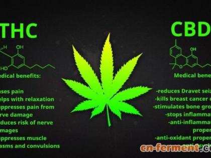 中国关于大麻二酚(CBD)的政策概述
