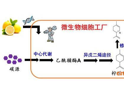 柠檬烯微生物合成研究获进展