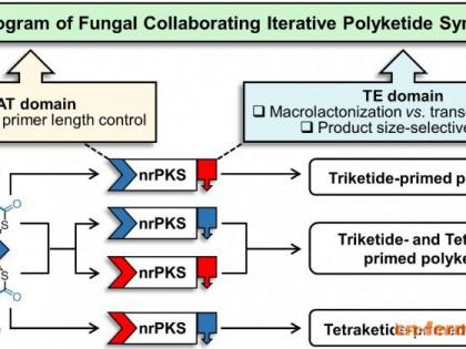 科学家解密和重编真菌聚酮天然产物的内源和外源生物合成程序