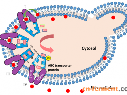 中农大燕国梁等过表达酿酒酵母转运蛋白结合生理工程促进β-胡萝卜素外排水平