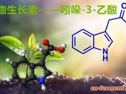 植物生长素——吲哚-3-乙酸