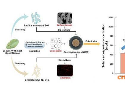 江南大学生物工程学院饶义剑指导团队在尾孢菌素发酵技术提高产量取得进展