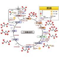 求购维生素B6和辅酶A