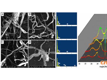 近代物理所在利用废纸资源发酵产纤维素酶研究方面取得进展 菌株可有效利用硬纸板纸为碳源产酶