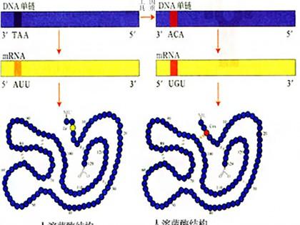 """""""重組人溶菌酶""""或成抗生素替代物"""