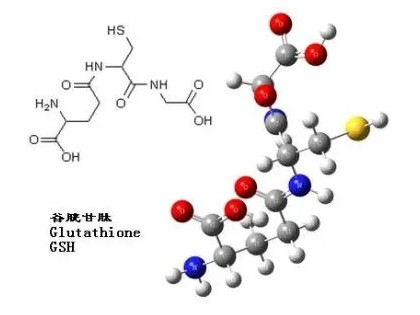 探讨谷胱甘肽的应用研究进展