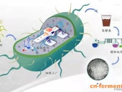 生物合成学产业化加速器,为新的制造方式加速度